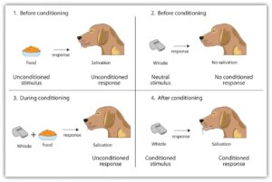 classical-conditioning-1.jpg